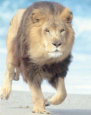 3_leones